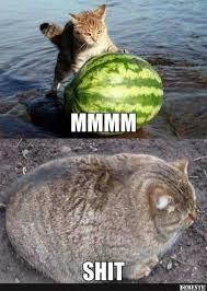 Veľká mačička XX