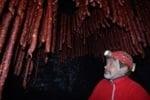 Jaskyňa snov